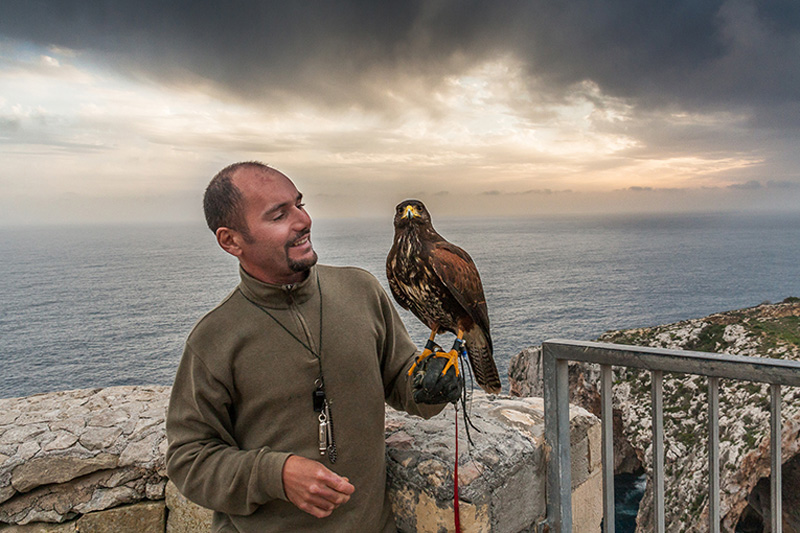 The Falcon has been associated with the island since medieval times © Kevin Grech