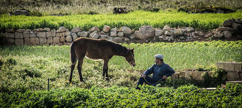 Encountering the rural side of Gozo is part of everyday life © Franklin Balzan